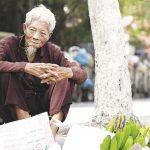 Nhờ cây Thông Đất: cụ ông 90 tuổi bị Lẫn nặng dần minh mẫn trở lại