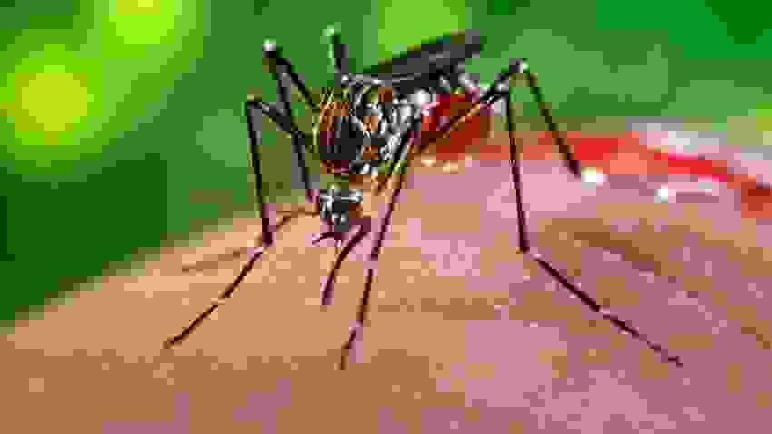 Virut Zika và khả năng gây teo não chu sinh 1