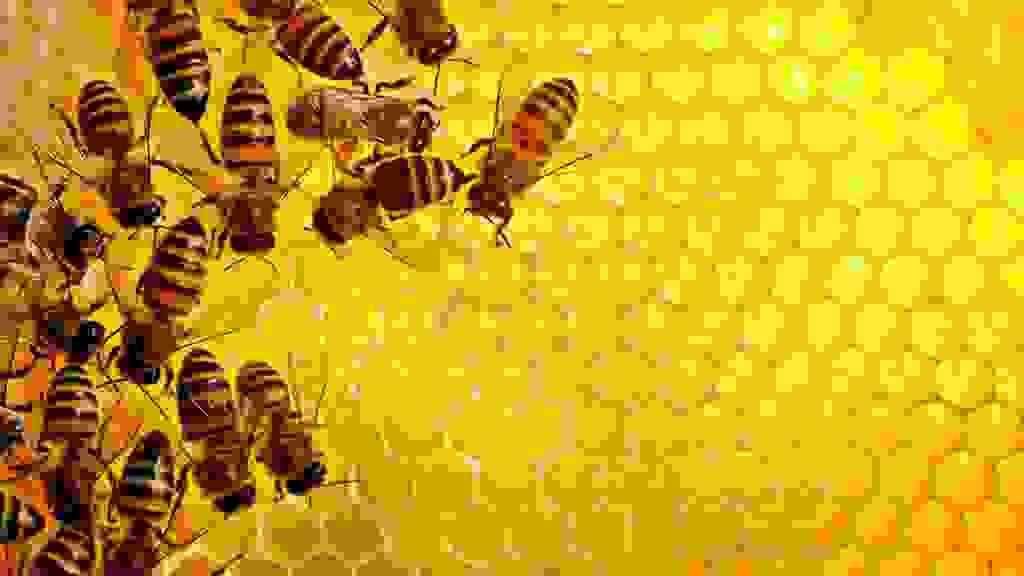 Mật ong cải thiện khả năng ghi nhớ 1