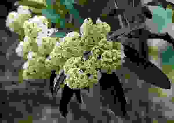 6. Hương hoa 1
